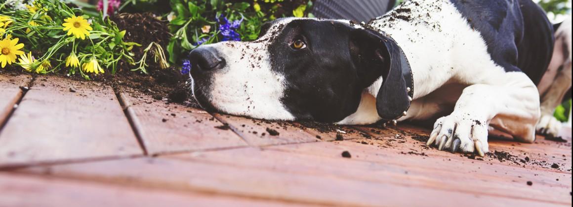 Slide – VPI Pet Insurance